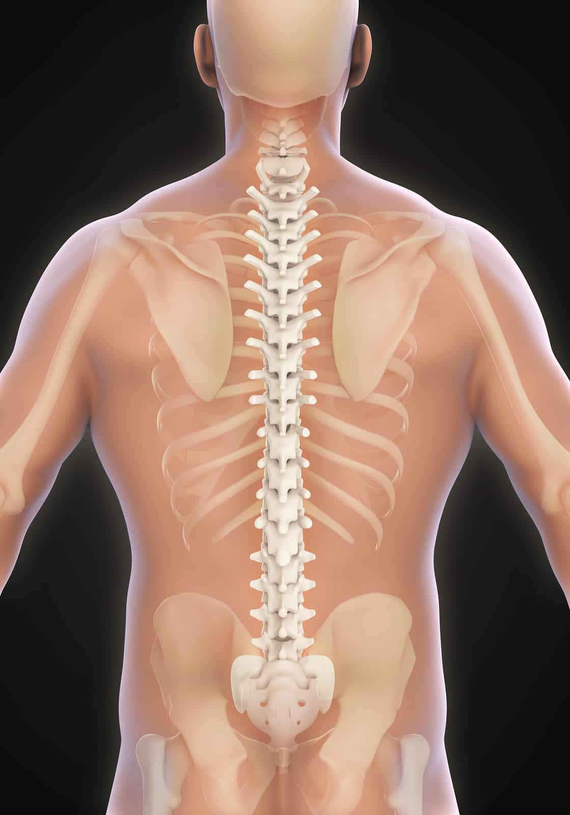 Drx9000 Le traitement de lépine dorsale