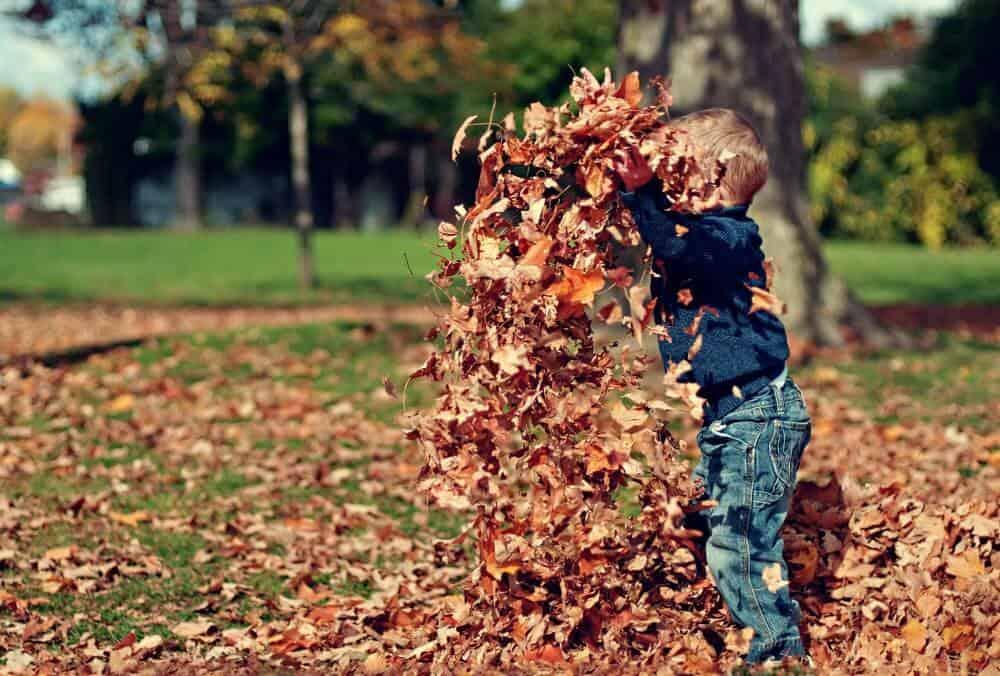 Ratissage de feuilles